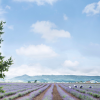 Thumbnail image for The Truth About Hokkaido in Summer