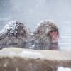 Thumbnail image for The Primate Principle