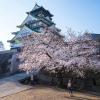 Thumbnail image for Osaka's Spiritual Sakura