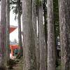 Thumbnail image for Discover the Magic of the Kumano Kodo