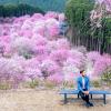 Thumbnail image for Apex of the Sakura