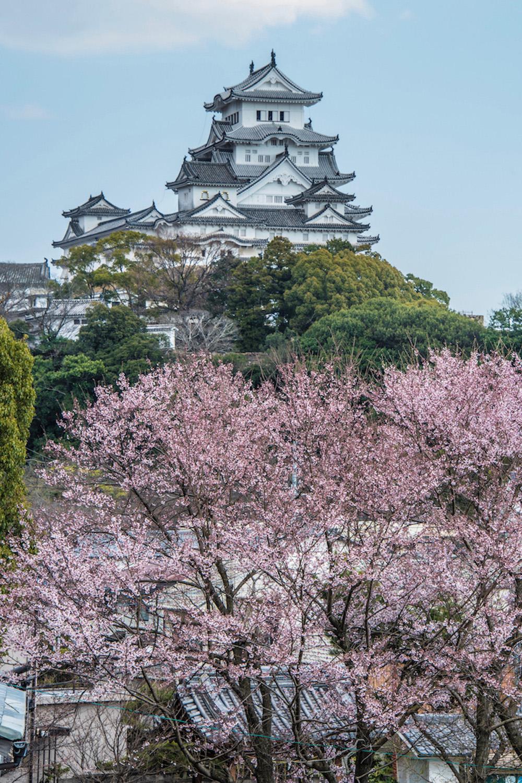 Sakura in Himeji, Japan