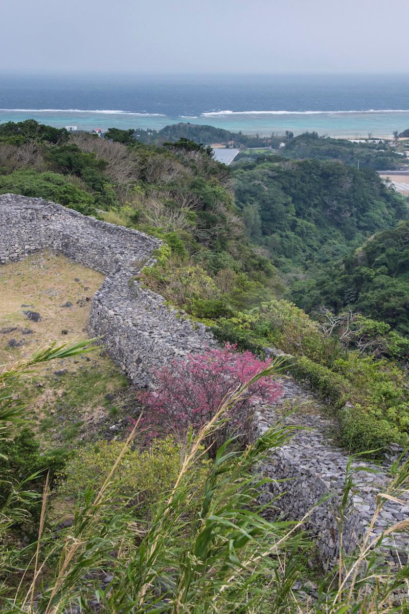 Sakura in Okinawa, Japan