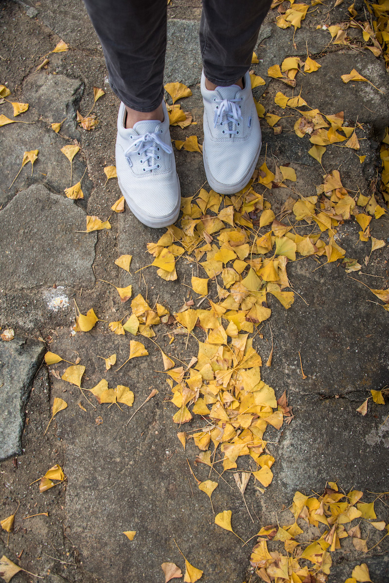 Fall colors in Japan Alps