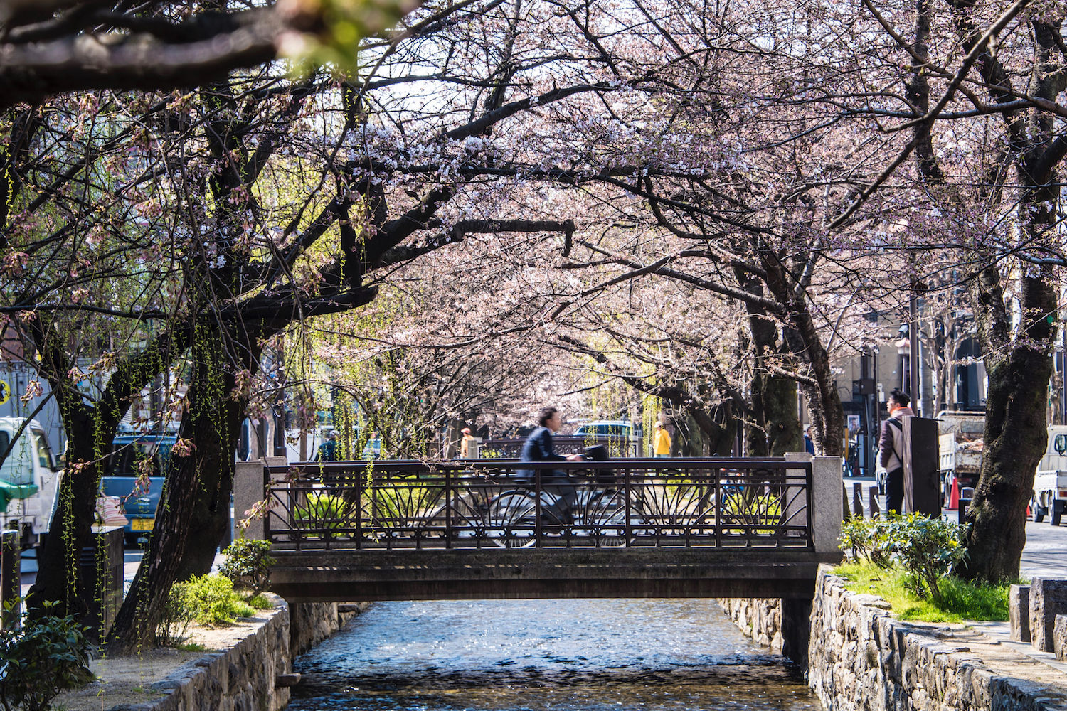 Man riding bike along Kyoto sakura canal