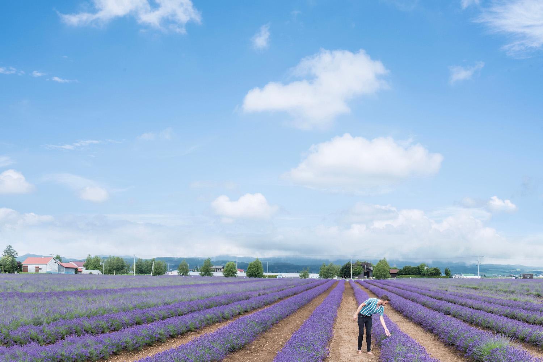 Lavender in Hokkaido, Japan