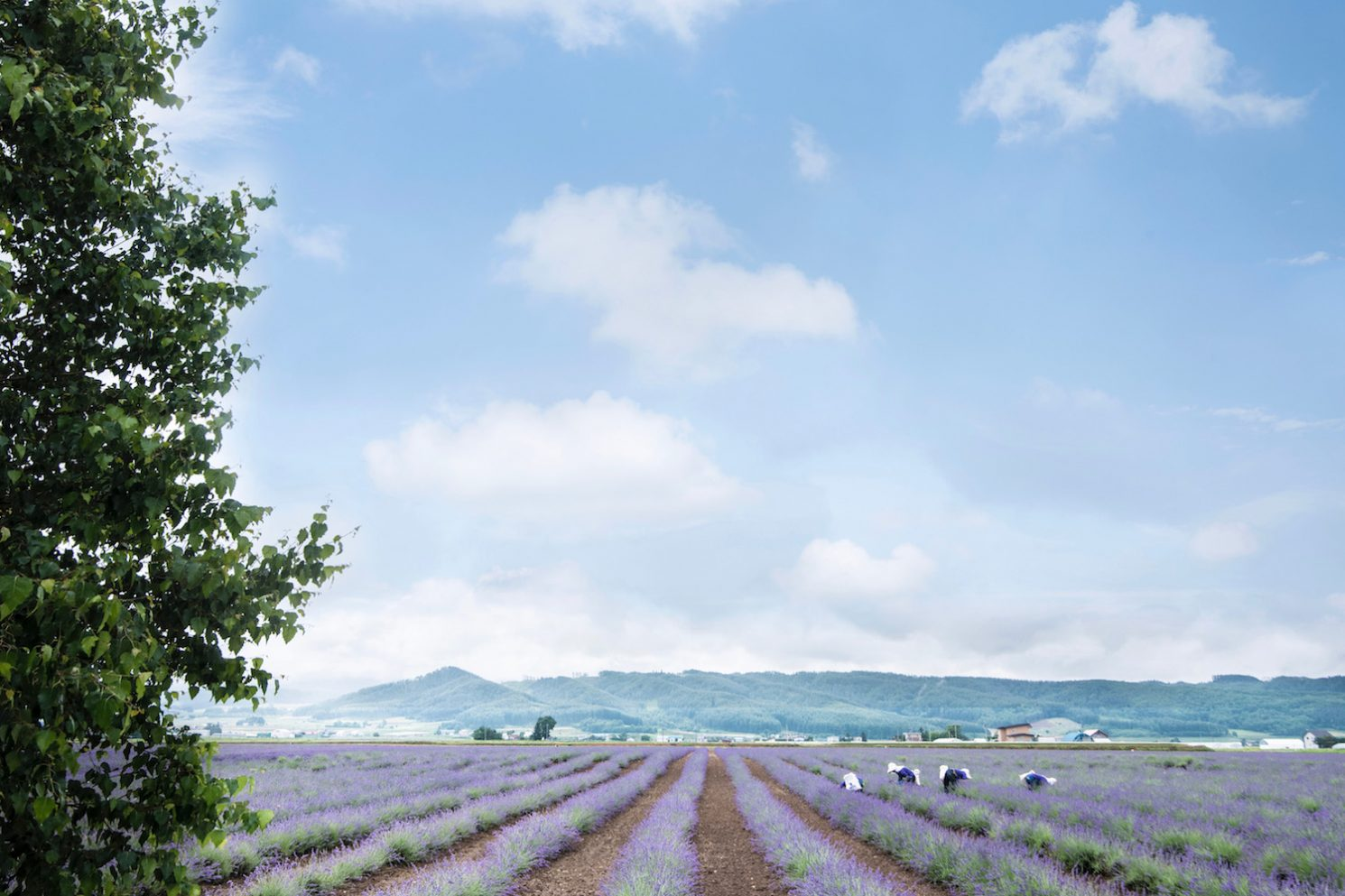 The Truth About Hokkaido in Summer