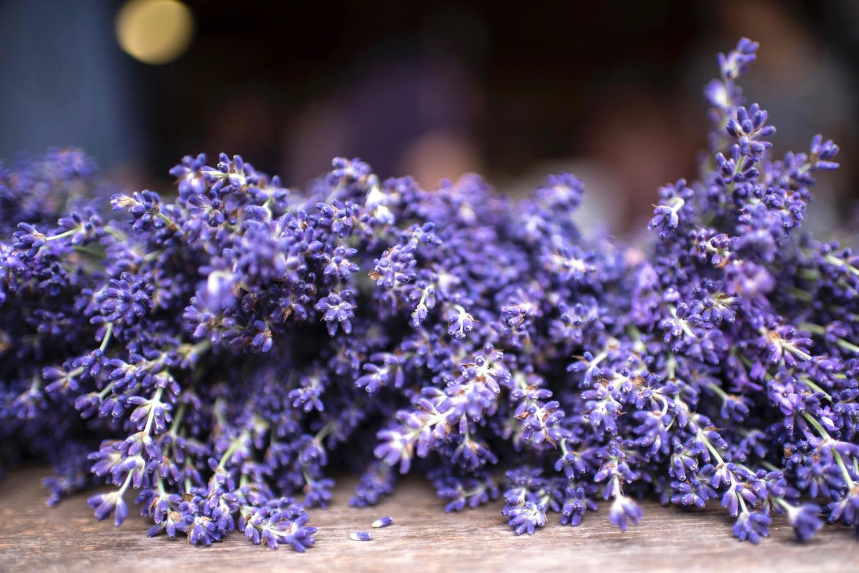 Lavender in Hokkaido