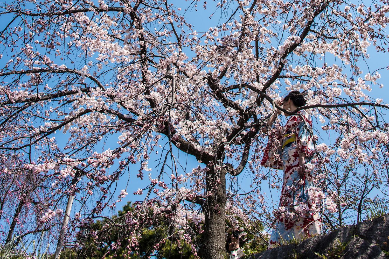 Gardens in Kyoto