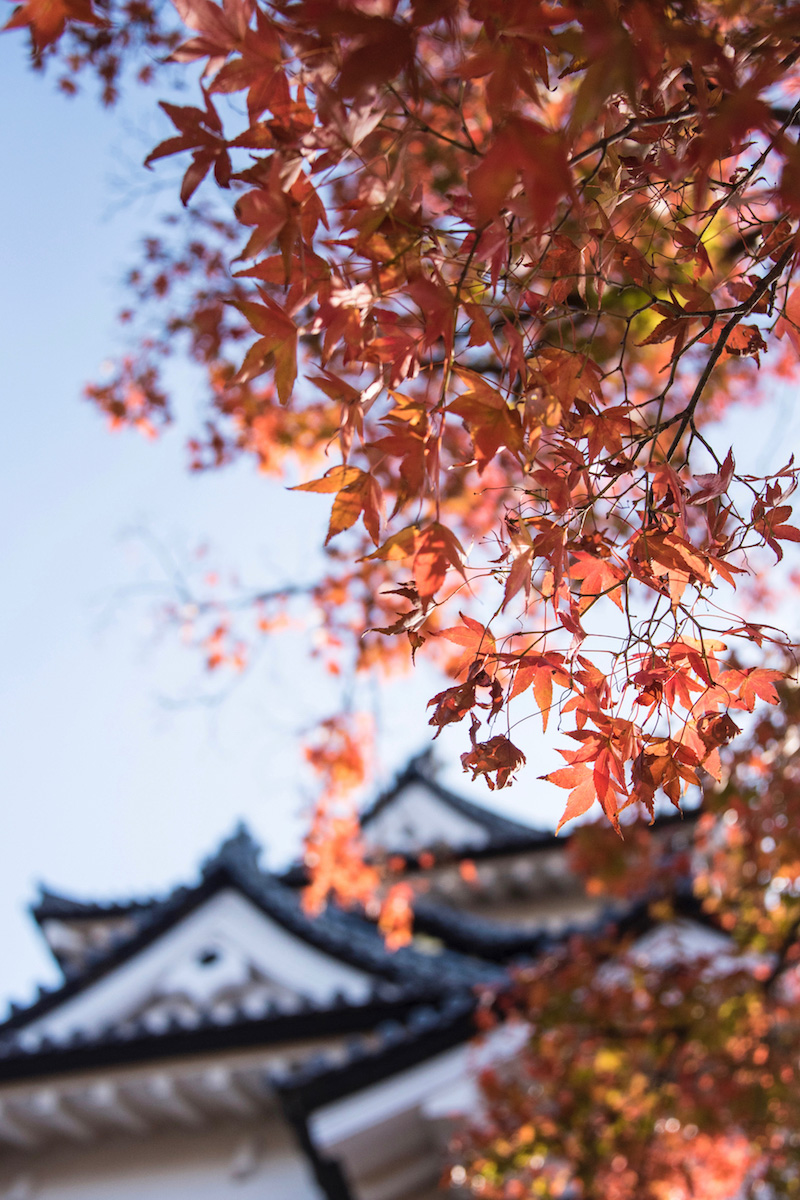 Fall colors at Hikone Castle