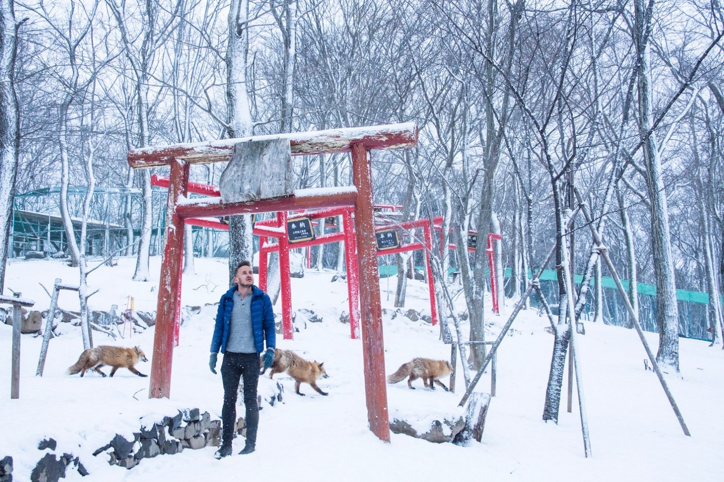 The Truth About Japan's Fox Village