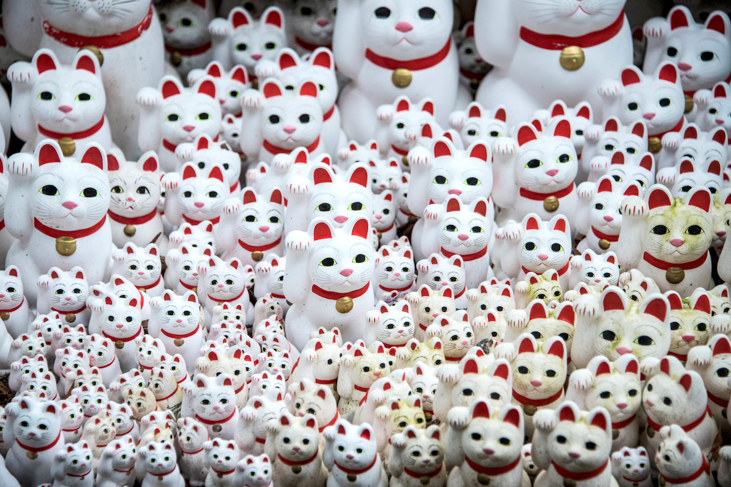 Lucky Cat Temple in Tokyo