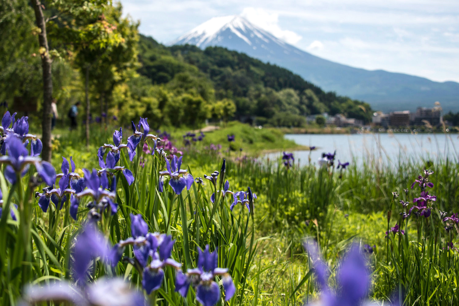 Flowers at the base of Mt. Fuji