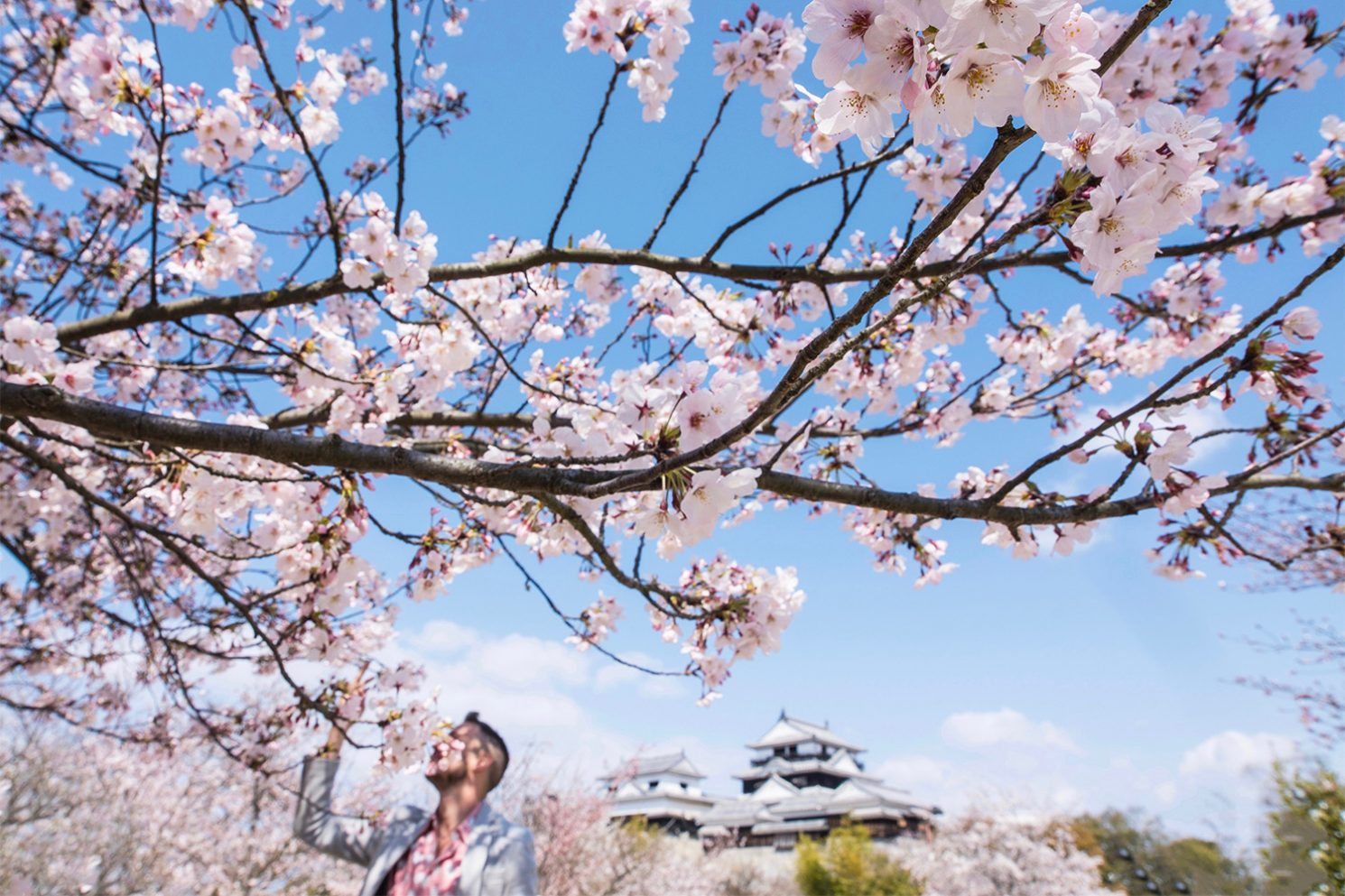 How to See Cherry Blossoms in Japan
