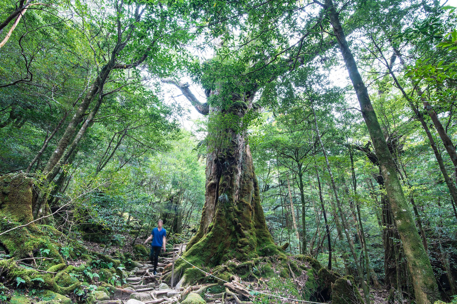 Robert Schrader in Yakushima Island, Japan