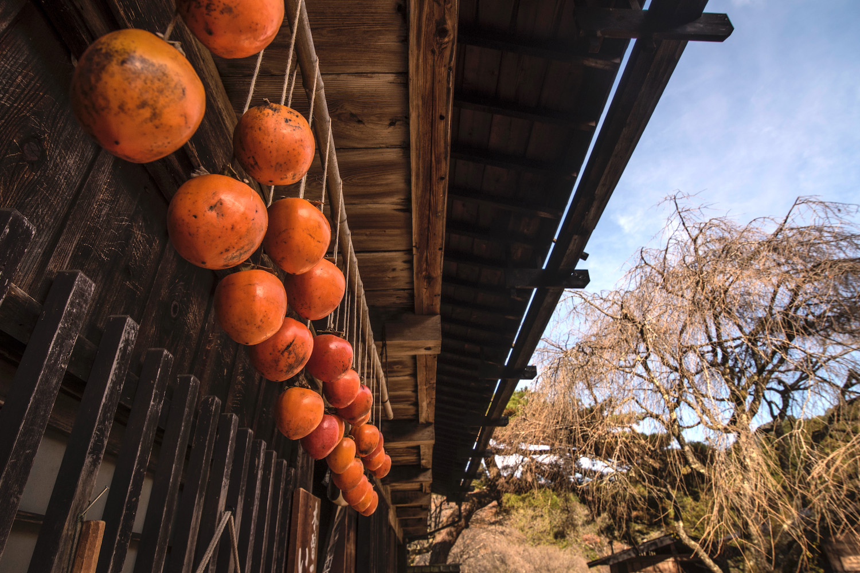 Persimmons drying in Japan