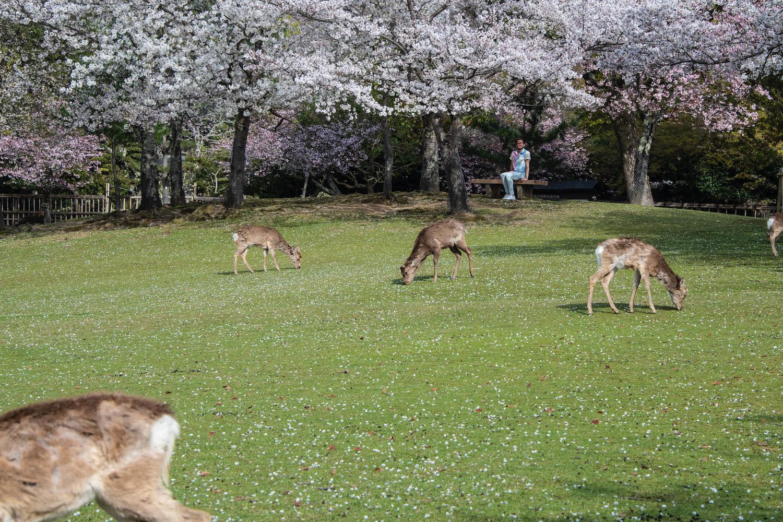 Is Nara worth visiting?
