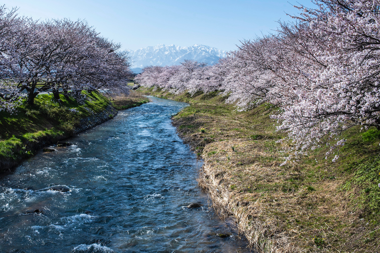 What To Know About Japan S 2022 Cherry Blossom Season