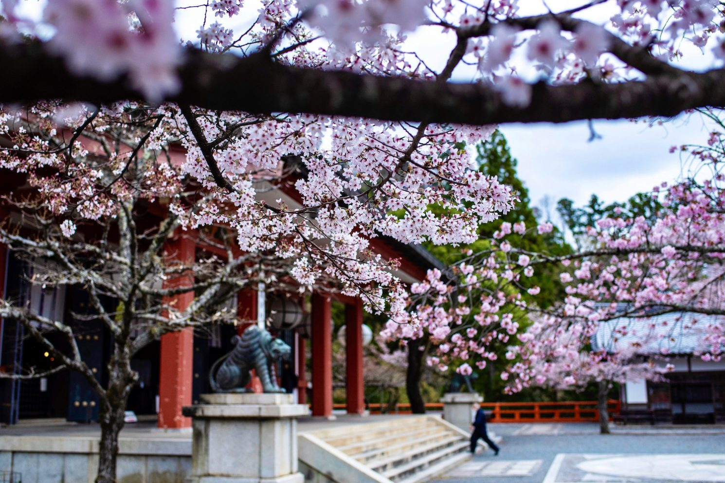 When Will Japan Open to Tourism Again?